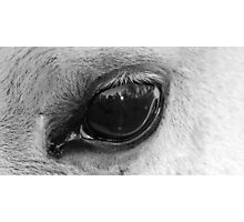 Eye of the wise Photographic Print