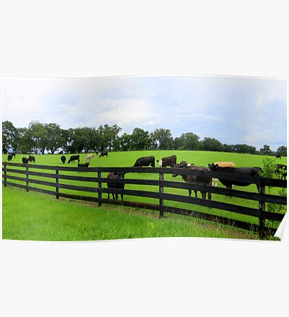 Field of Cattle Poster