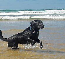 Fun in the sea by Revd Andy Barton