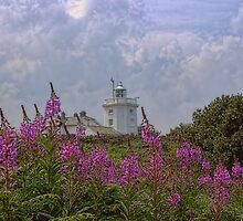 Purple flowers with Cromer lighthouse by Avril Harris