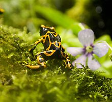 Little frog by TheSmileEffect