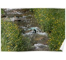 INDIAN SPRINGS CREEK IN BLOOM Poster