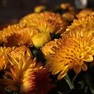 Mums the Word by aprilann