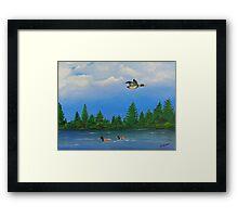 Maine Mallards Framed Print