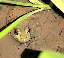 Hello Mr Frog by Meghan1980