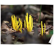 Yellow Spindle Coral  Poster