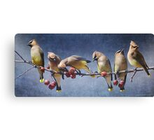 row of waxwings with crabapple fruit Canvas Print