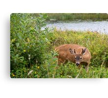 Can You See Me Now???? Canvas Print