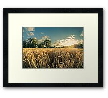 Cornfield at Sunset Framed Print