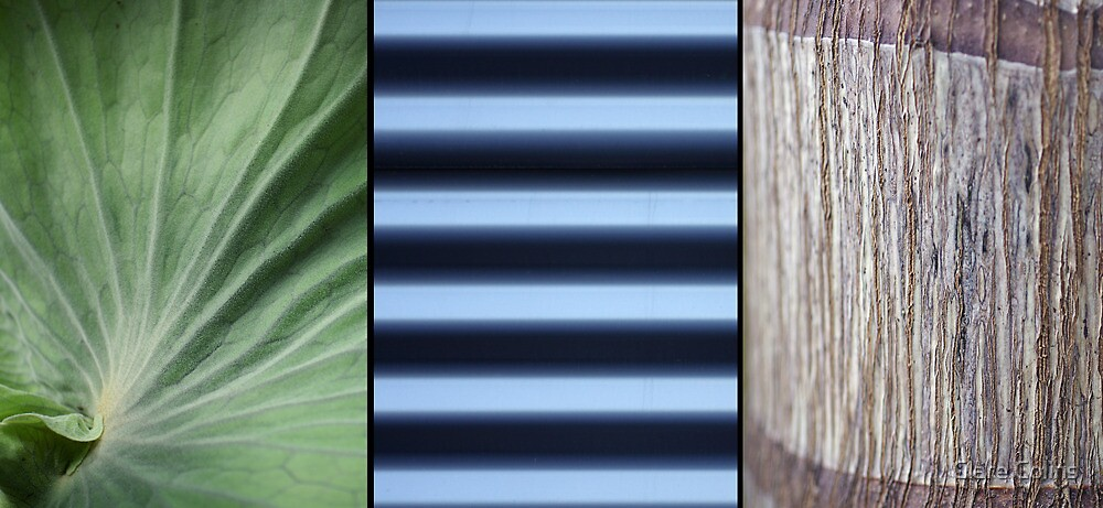 Garden Triptych by Clare Colins
