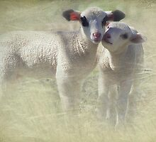 Lamb Twins by Clare Colins