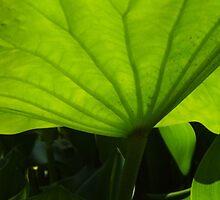 Under The Hyacinth by WildestArt