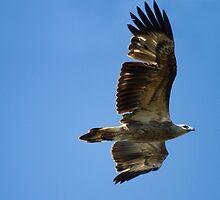 Spirit Bird by byronbackyard