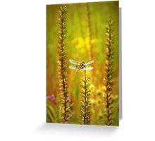 Dragonfly Splendor Greeting Card