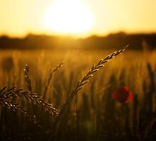 Sunset Over Field by Aeleina