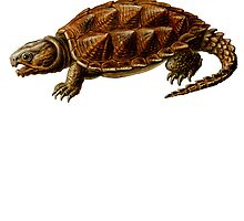 Prehistoric Turtle by kwg2200