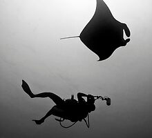 Manta and Diver in Black and White by Azim Musthag