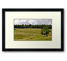Appleton Cows Framed Print