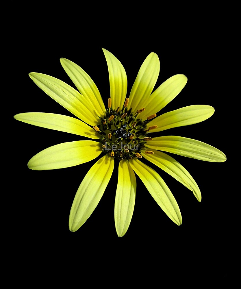 Yellow Flower by LeJour