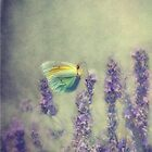 butterfly by lucyliu
