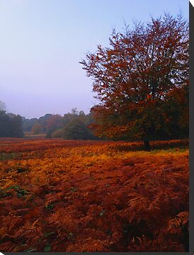 Autumn Field by JenThompson85