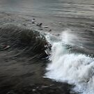 west java surf 5 by wellman