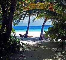 Coco Palm by JenThompson85
