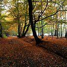 Autumn Woodland Path by JenThompson85