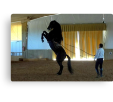 Menorcan Pure-Bred Dancing Horse Canvas Print