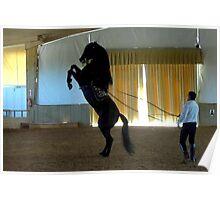 Menorcan Pure-Bred Dancing Horse Poster
