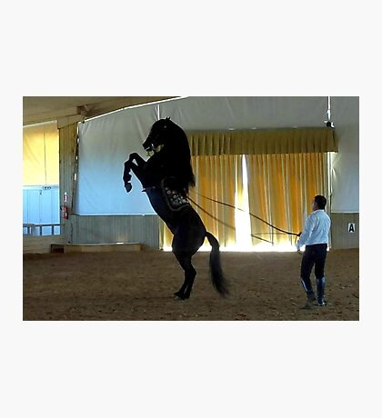 Menorcan Pure-Bred Dancing Horse Photographic Print