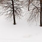 trees in the snow by ELENA TARASSOVA