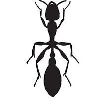 Black Ant by kwg2200