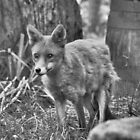 Woodland Fox by JLaverty