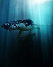 Polar migration by John Medbury (LAZY J Studios)