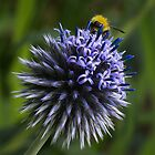 Globe Thistle and the Bee by Angie Morton