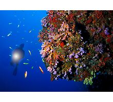 Wall of coral Photographic Print