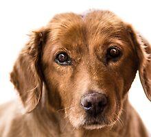 puppy eyes by TOM KLAUSZ