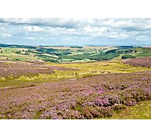 Landscape of Heather Photographic Print