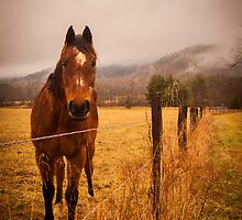 Cades Cove Horse by Alex Banakas