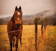 Cades Cove Horse by Alex Banakas