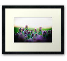 Purple Dead Nettle Framed Print