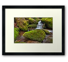 Moss Covered Rock Framed Print