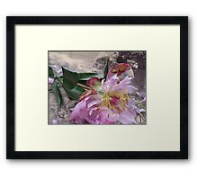Dead Flower Framed Print