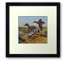 Mallards Over The Prairie Framed Print