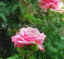 Pink Roses in Anzures 5  Sketchy by Christopher Johnson