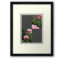 Pink Roses in Anzures 5  Blank Q6F0 Framed Print