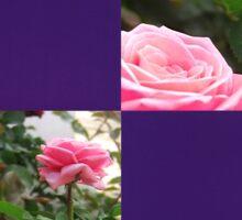 Pink Roses in Anzures 5  Blank Q9F0 Sticker