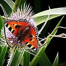 Teasel and Tortoiseshell by Lisa Kent