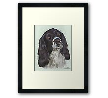 Black and white Springer Framed Print